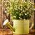 camomila · flores · superfície · flor · família - foto stock © gitusik