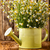 rumianek · herbaty · kubek · Daisy · kwiat - zdjęcia stock © gitusik