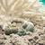 beyaz · mercan · denizyıldızı · yalıtılmış · doğa · deniz - stok fotoğraf © gitusik
