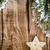 金 · 星 · 飾り · クリスマス · ライト - ストックフォト © gitusik