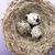 卵 · イースター · グリーティングカード · 巣 · 木製 · 食品 - ストックフォト © gitusik