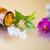розовый · орхидеи · zen · камней · красоту · расслабиться - Сток-фото © gitusik