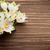 görüntü · makro · Paskalya · doğa · bahçe · çiçek - stok fotoğraf © gitusik