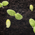 sementes · crescido · jovem · mudas · primavera · folha - foto stock © gitusik