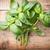 ramoscello · fresche · basilico · isolato · bianco · alimentare - foto d'archivio © gitusik