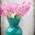 rosa · jacinto · flores · vermelho · pote · isolado - foto stock © gitusik