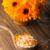 homeopáticos · medicina · secar · flores · superfície - foto stock © gitusik