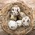 tojások · étel · tojás · asztal · sötét · kagyló - stock fotó © gitusik