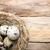 巣 · 卵 · 小枝 · グランジ · 青 · スペース - ストックフォト © gitusik