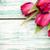 tulip stock photo © gitusik