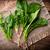 spinazie · salade · ondiep · licht · blad - stockfoto © gitusik