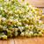 kamilla · fehér · gyönyörű · virág · tavasz · természet - stock fotó © gitusik
