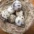 Paskalya · yuva · yumurta · rustik · ahşap · yumurta - stok fotoğraf © gitusik