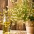 chamomile stock photo © gitusik