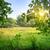 森林 · 林間の空き地 · 空 · ツリー · 草 · 夏 - ストックフォト © givaga