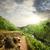 chá · verde · campos · luxuriante · Monte · Fuji · paisagem · neve - foto stock © givaga