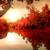 fák · tó · ősz · színes · levelek · égbolt - stock fotó © givaga