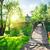 köprü · dere · orman · yeşil · çağlayan · nehir - stok fotoğraf © givaga