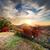 autumn in the mountains stock photo © givaga