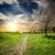 дороги · впереди · закат · солнце · пейзаж · лет - Сток-фото © givaga