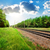 railroad and pine forest stock photo © givaga