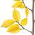孤立した · 落葉性の · ツリー · 白 · 木材 · 緑 - ストックフォト © givaga