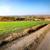 road through winter crops stock photo © givaga