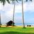 tropikal · çim · kulübe · caribbean · plaj · güneş - stok fotoğraf © givaga