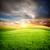 tramonto · sole · campo · verde · fresche · erba - foto d'archivio © givaga