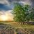 seca · terra · noite · pôr · do · sol · aquecimento · global · água - foto stock © givaga