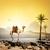camel and birds stock photo © givaga