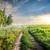 estrada · amarelo · girassol · campo · céu - foto stock © givaga