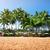 parasol · strand · tropische · paraplu · matras · palmbomen - stockfoto © givaga
