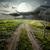 yol · orman · dumanlı · sis · araba · ağaç · manzara - stok fotoğraf © givaga