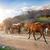 paarden · boerderij · huis · natuur · paard - stockfoto © givaga