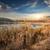 reeds and lake stock photo © givaga