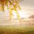 campo · nuvoloso · cielo · tramonto · primavera · sole - foto d'archivio © givaga