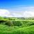 spring landscape stock photo © givaga
