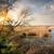 autumn and river stock photo © givaga