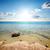 trópusi · Vörös-tenger · hal · tájkép · tenger · háttér - stock fotó © givaga