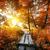 川 · 黄色 · オレンジ · 紅葉 · 森林 - ストックフォト © givaga