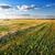 hay on field stock photo © givaga