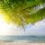 puesta · de · sol · tropicales · palmas · agua · sol · mar - foto stock © givaga