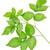 ラズベリー · 緑の葉 · 白 · フルーツ · 赤 · スタジオ - ストックフォト © givaga