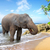 elephant on the beach stock photo © givaga