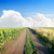 road in a sunflower field stock photo © givaga