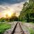 railroad through the forest stock photo © givaga
