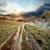 brouillard · coucher · du · soleil · printemps · herbe · forêt - photo stock © givaga