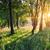 林間の空き地 · 光 · 草 · 太陽 · 緑 · 葉 - ストックフォト © givaga