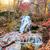 осень · лес · потока · реке · листьев - Сток-фото © givaga